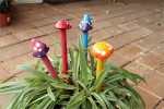 Magic-Mushies